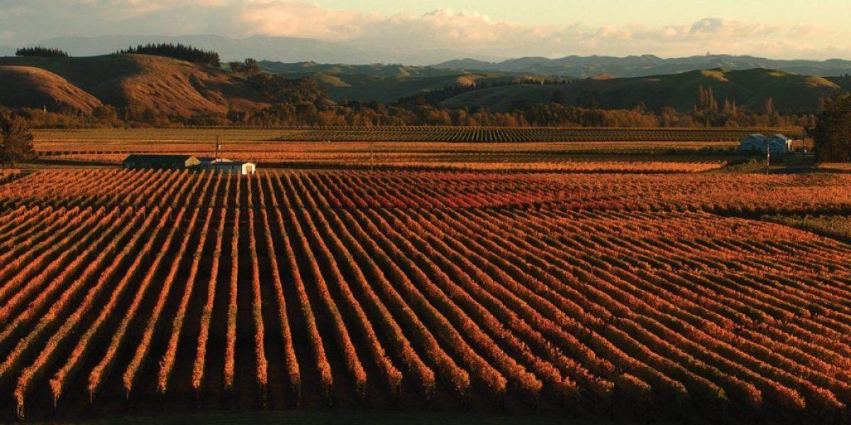 Winery-trinity-hills