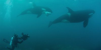 Underwater Photography M2 Magazine