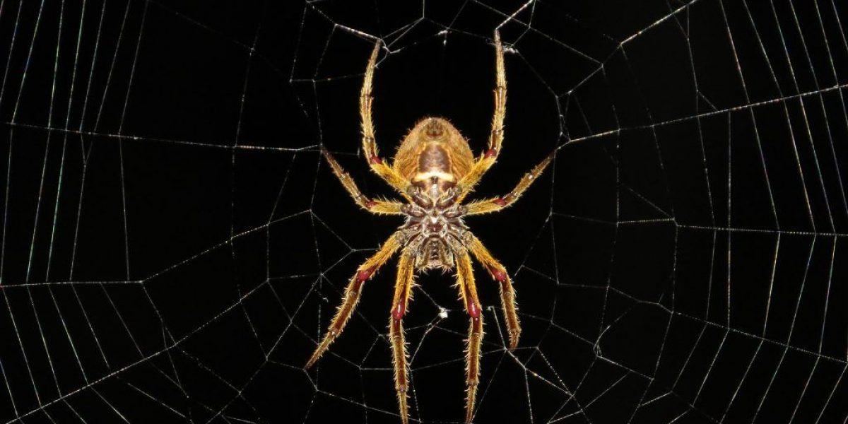 spider M2 Magazine