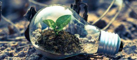 growth in lightbulb