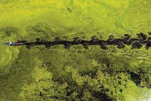 M2 Photo Series: Grass Is Greener