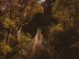 m2-day-hiking-nz