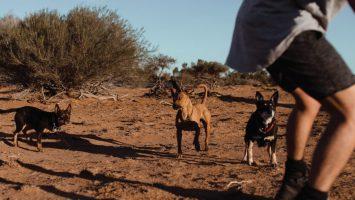 M2now.com - Health News - Join a Dog Marathon and more...