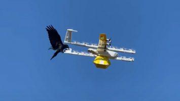 raven-drone